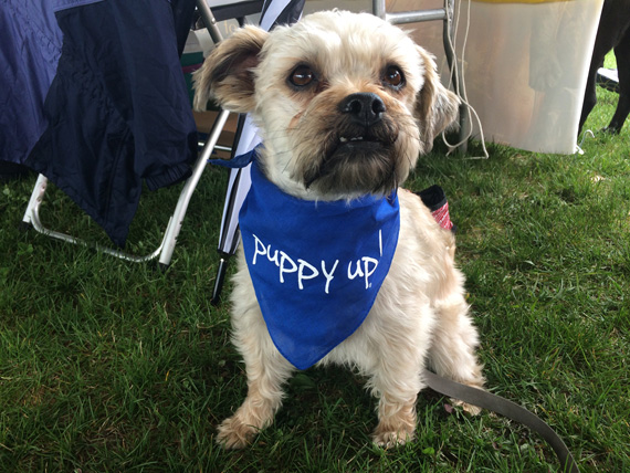 Dog in puppy up bandana Madison 2015