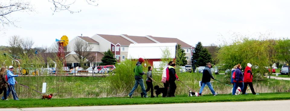 Dogs and people walking in last year's event