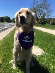Cricket ready to walk with Dr.Laura Purdy to take a bite out of canine cancer