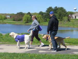 Dogs and their owners walk in support of canine cancer research
