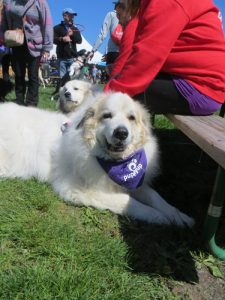 Great Pyrenees have the best smiles