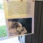 Touching tribute to a beloved pet