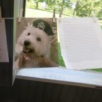 Photo and story to honor Max, beloved Westie