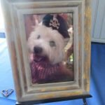 Portrait of Max, beloved Westie, who didn't mind wearing hats