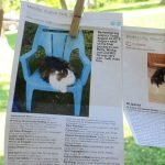 One of many photos and heartfelt tributes to lost pets