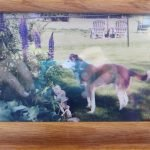 Framed photo in memory of a beloved family dog