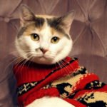 End of Life Care for Pets Around the Holidays