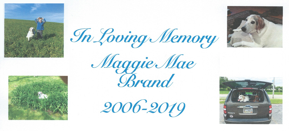 Collage memory for Maggie Mae, blue-tick hound
