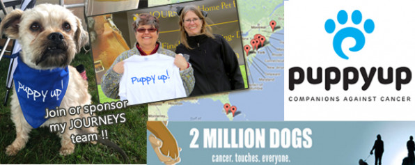 Puppy Up Madison 2016! Walk, Donate, Encourage the Journeys Team