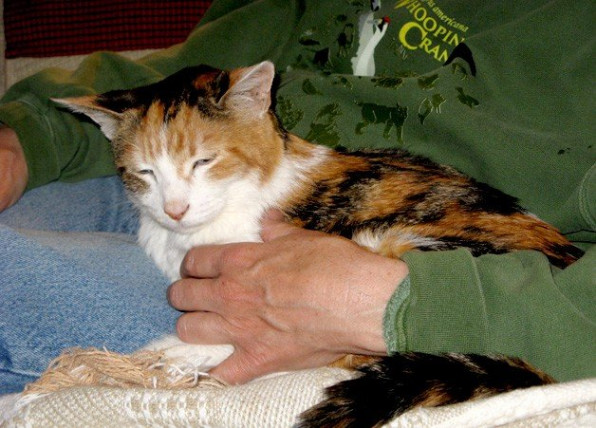 hands of woman holding an elderly cat on a blanket