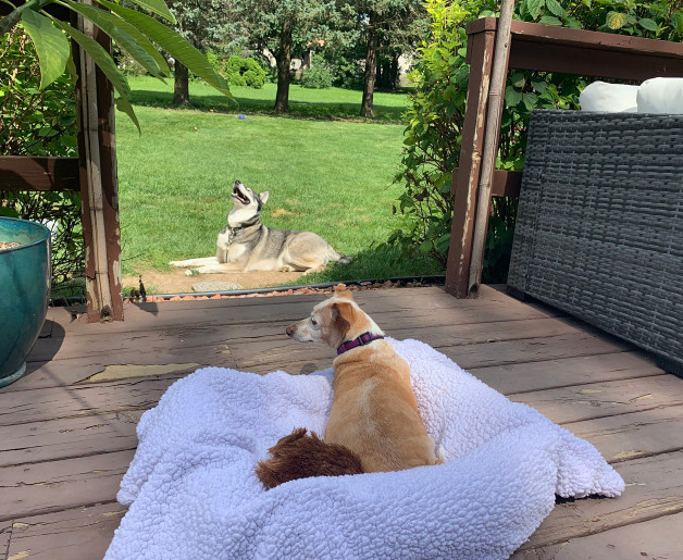 Peaches enjoying the deck with other animal family members