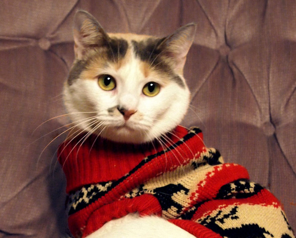 cat in holiday sweater looking sad