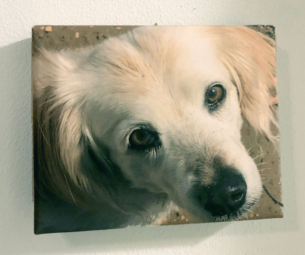 photo of a picture of Annie (memorial tribute)
