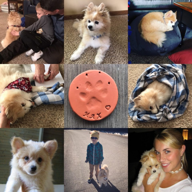 Maximus - a collage of dog pictures