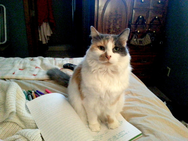 Calico cat looking happy on her notebook