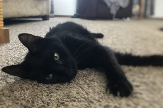 Black cat on the rug - Floyd