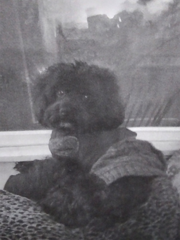 Black dog in sweater (grayscale photo)