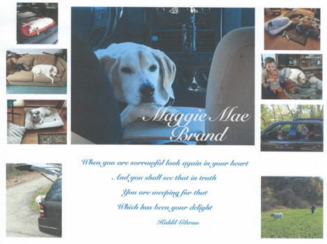 Maggie Mae Brand