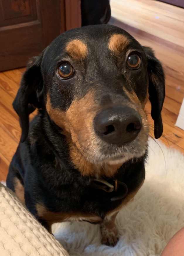 sad eyed dog sitting (Sadie)