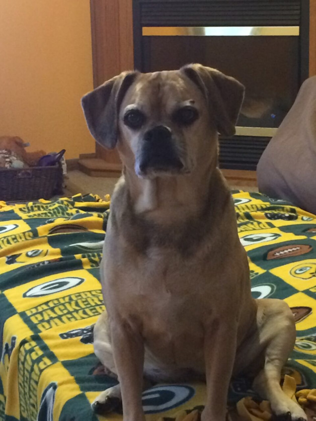 Dog on Green Bay Packers quilt