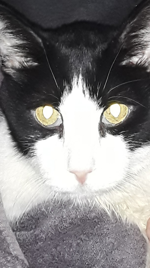 Black and white cat. Beloved Murphy R.I.P. 12/29/2020