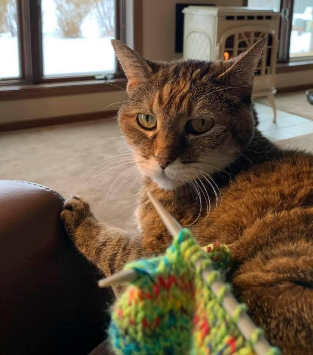 Tabby with knitting - Addy from Waunakee