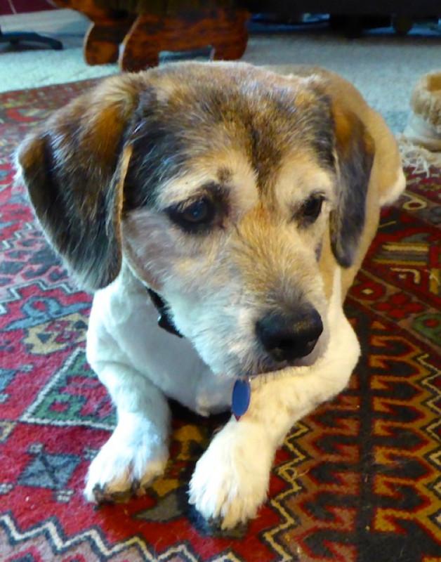 The small soulful eyed dog Cronkite